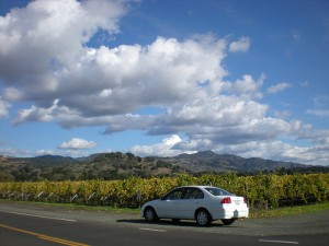 Vineyards in Oakville CA