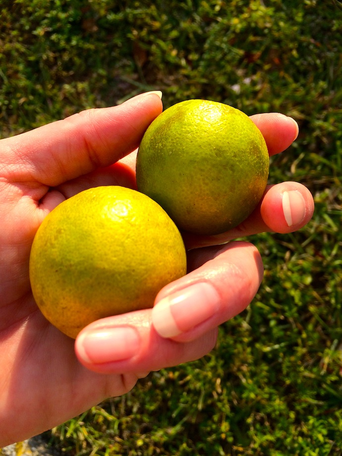 Citrus Adventure